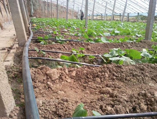 蔬菜大棚滴灌设备_蔬菜大棚滴灌管